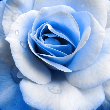 Blue_Rose_by_InnoCYNt